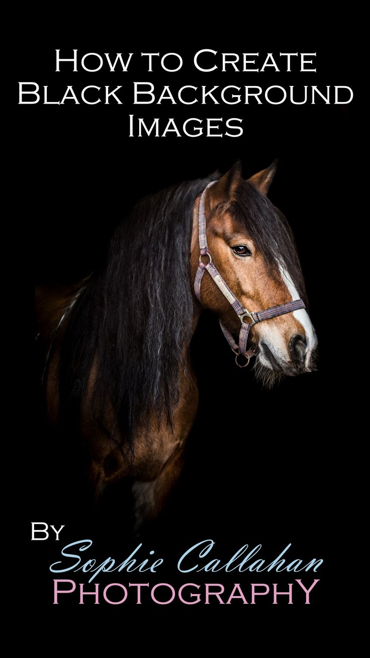 Black Background Shots Video Tutorial - by Specialist UK Equine Portrait Photographer, Essex I via sophiecallahanblog.com I #equinephotography #photography #equineblogger
