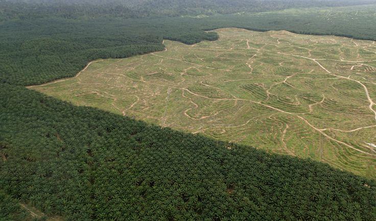 Borneo-Palm-Oil_Pix2.jpg (3933×2315)
