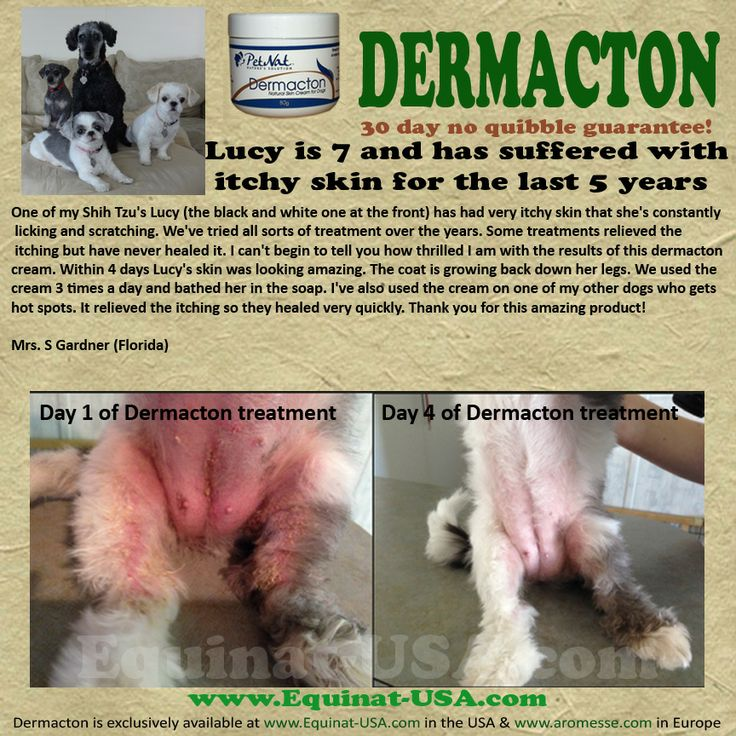 This dog has been dealing with itching redness and sore skin / allergies for 5…