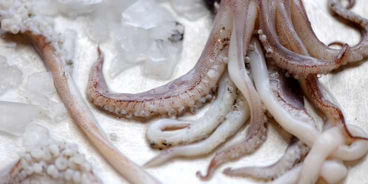 How to Cook Squid Sous Vide - Great British Chefs