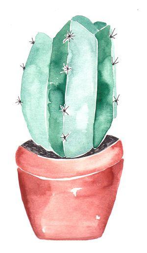 kaktus Gretasschwester