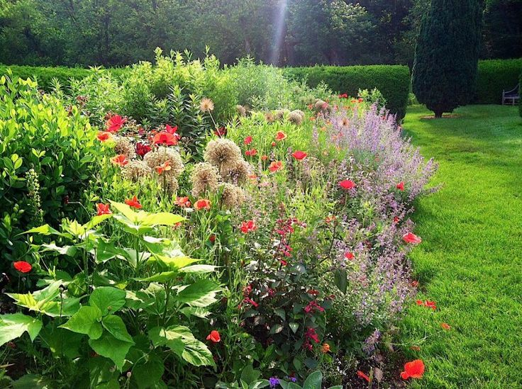 17 best images about it 39 s hard to find a good perennial for Herbaceous border design examples