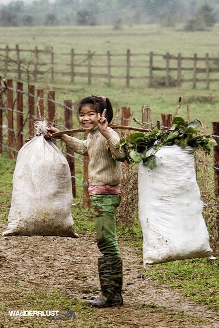 Collecting greens . Vietnam