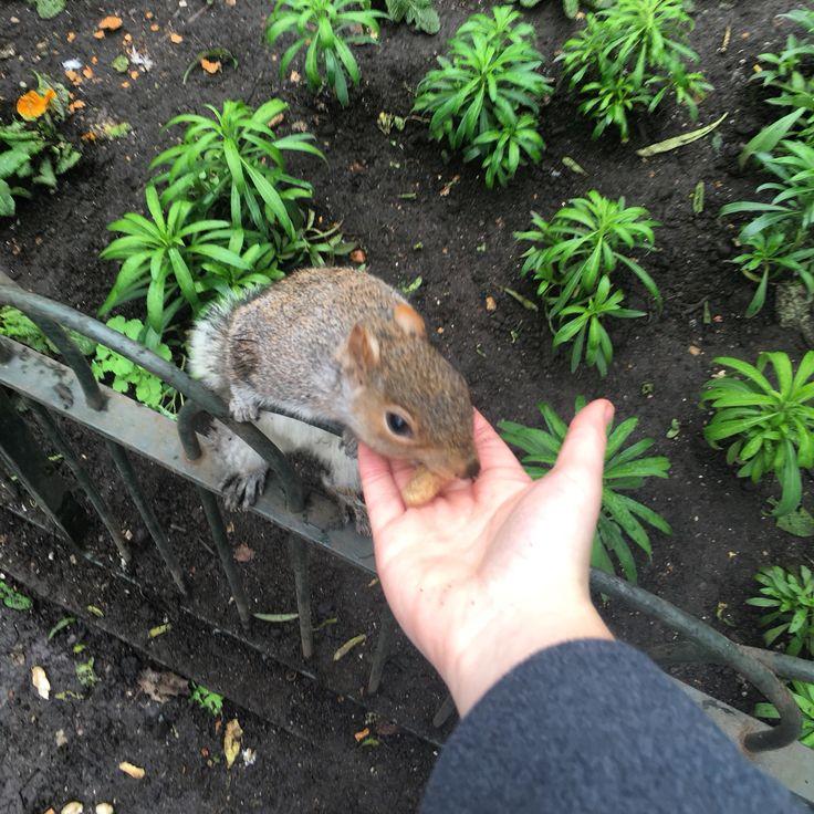 Feeding a squirrel in London
