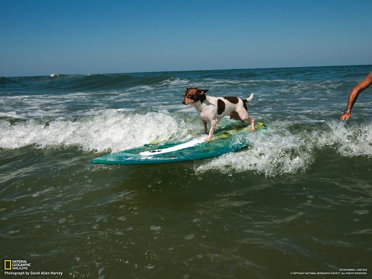 Outer Banks Surf Shop - Home | Facebook