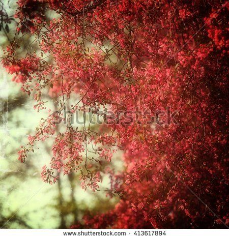 Beautiful blooming red flowers on a tree in the park.