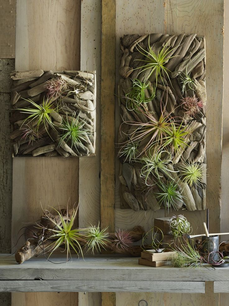 Tillandsia On Driftwood Wall Garden Panels  Inspired by Parisian wall gardens, modular panels paired with easy-care tillandsias to create a living wall.