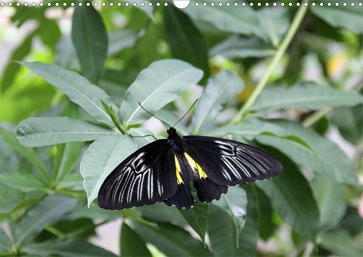 """Tier-Posterbuch """"Schmetterlinge der Tropen"""", Seite 2"""