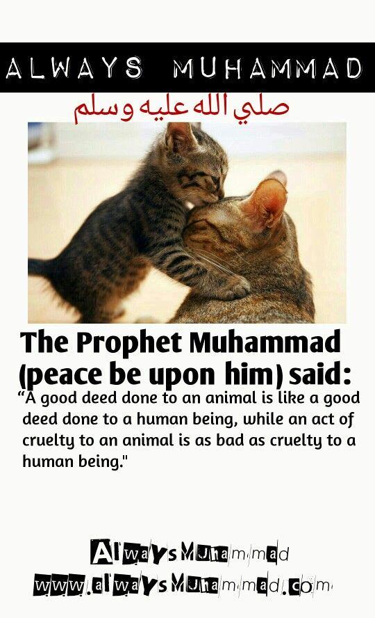 5: Muezza, Savior of the Prophet Muhammad - 10 Cats Who ...