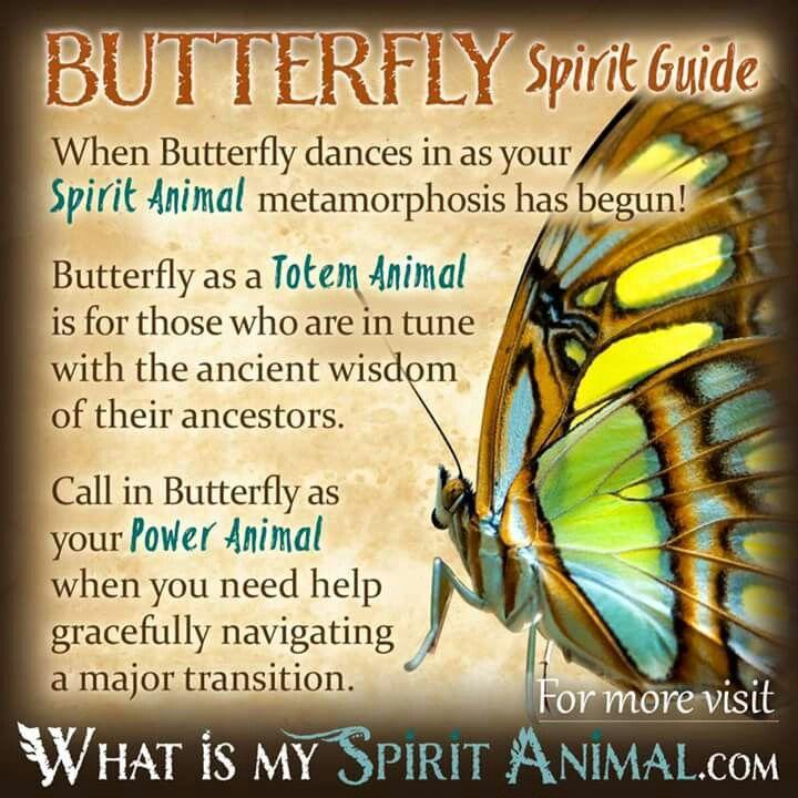 Butterfly Spirit Guide / Animal Totem