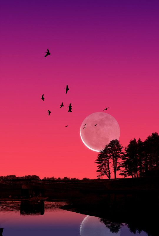 Even though the sky is still pink, once the sun has gone down, the moon will pop out over the trees and show its beauty.