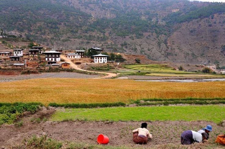 Θερίζοντας στα οροπέδια του Μπουτάν