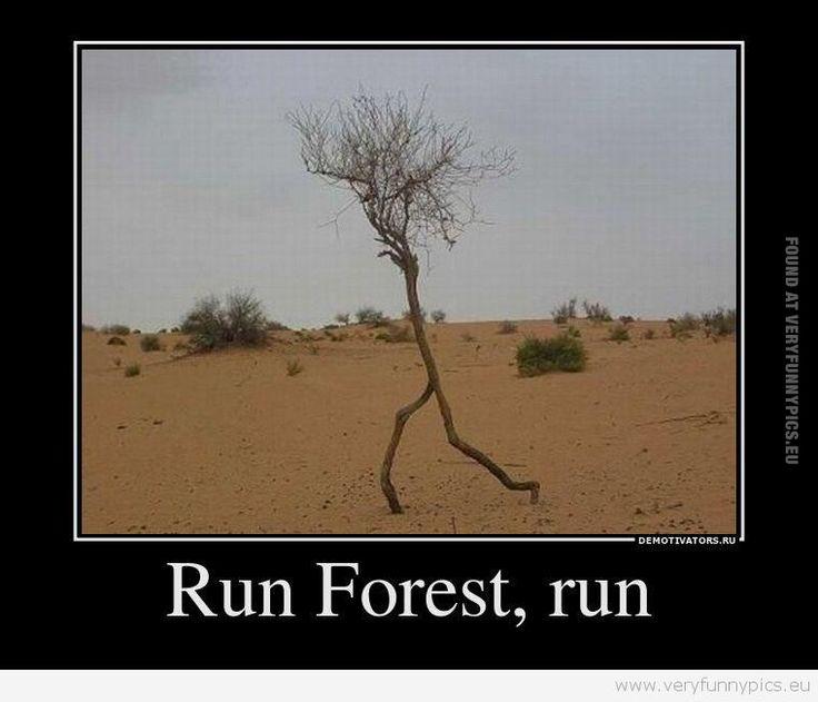 Forrest Gump Funny Quotes: 1000+ Images About Forrest Gump On Pinterest