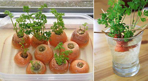 Морковная ботва в салат