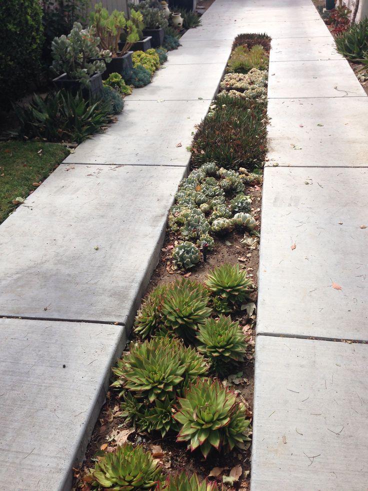 17 best images about succulent succulence in the landscape - Punch home landscape design pro 17 5 crack ...
