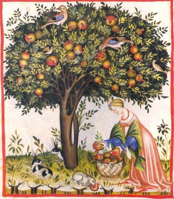 Tacuinum sanitatis de Cerruti - Franz Unterkircher, Tacuina sanitatis (XIV secolo)raccolta dei melograni