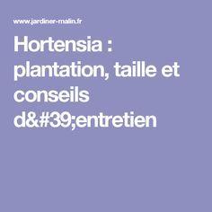 Hortensia : plantation, taille et conseils d'entretien