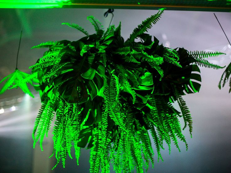 Hanging foliage for a Brisbane event. This one was approximately 1.5 x 1.5 mts.