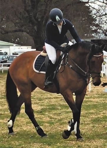 16.1hh, 8yo TB bay gelding by the top TB jumping sire, Zabeel. Beautiful conformation, established on the flat including leg yeild and shoulder in. Been competing at large showjumping shows up to 1.05, proving to be a naturally competitive showjumper. Scottie's lovely looks make him good enough for the hack ring and yet talented enough to succeed in showjumping or eventing. A gentleman to handle in every way.  Other young horses available include a Copabella Visage 4yo gelding &  $8000