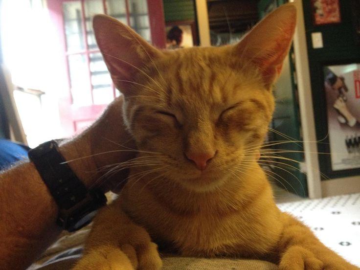 My friend's polydactyl cat is happy. http://ift.tt/2fKqK4U