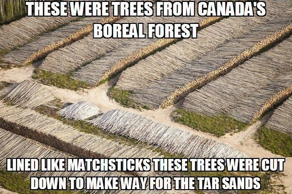 A discussion on the issue of deforestation in canada