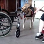 How To Help The Dogs, Who Help Disabled Veterans?  Can you imagine, how precious a Service Dog for a disabled veteran is? And can you imagine how it hurts the veteran, when he cant feed his Service Dog properly?   It seems to be a problem for many veterans, to maintain there service dogs with enough food and veterinary care. Not only the service dog suffers, also the veteran will have a hard time. Do you agree?   Is there a help organization for Veterans Service Dogs?   After Connie ..