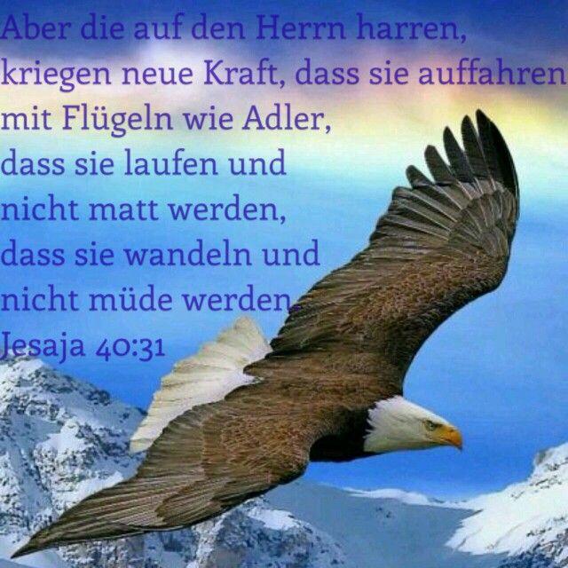 Jesaja 40, 31   Bibelverse, Bibel vers, Bibelvers zitate