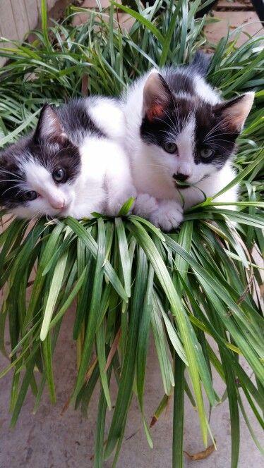 Our little kittens in the backyard.