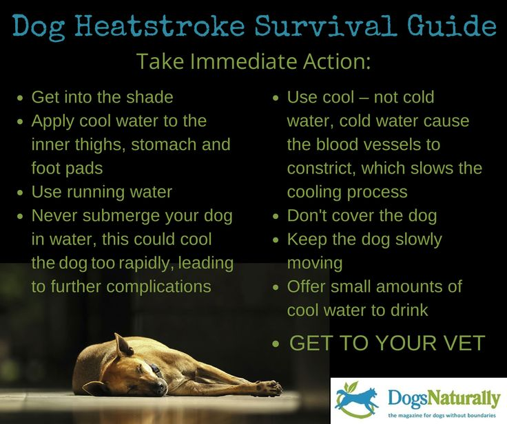 English Springer Rescue America, Inc. ~ Dog Heatstroke Survival Guide