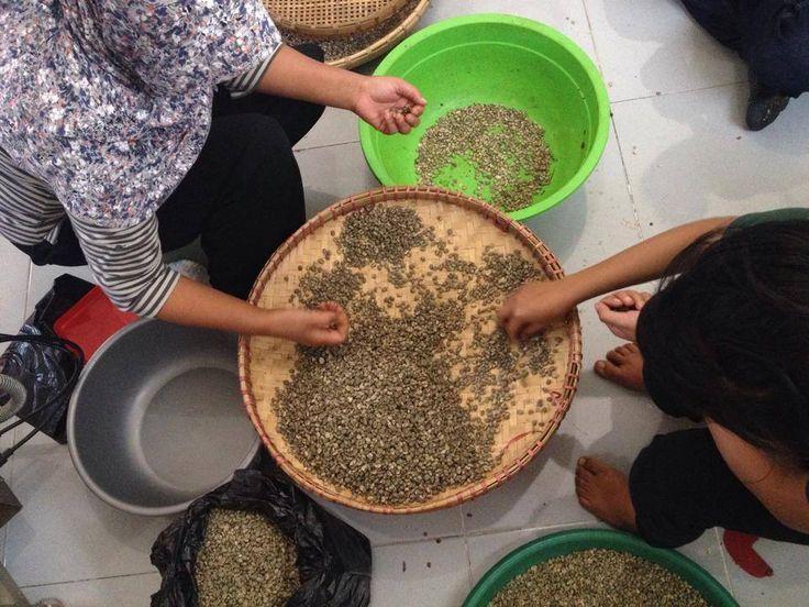 Biji kopi dr Tlahap Temanggung