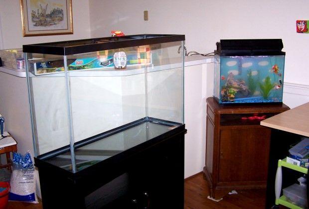 17 best ideas about goldfish tank on pinterest aquarium for Fancy fish tanks