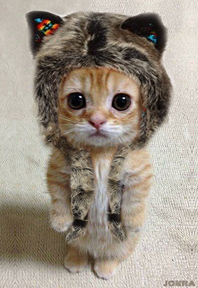 Kitten in a little kitten hat.  Well how cute is that?