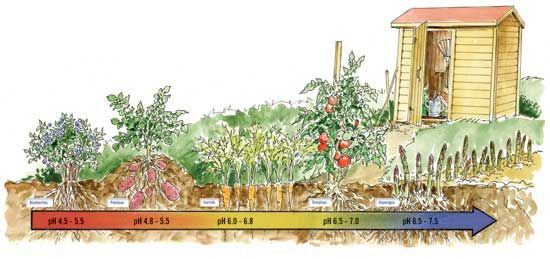 Your Garden's Soil pH Matters - Learn what causes acidic soil and alkaline soil, plus how to apply the results of a soil pH test in your organic garden. Read more in this article from MOTHER EARTH NEWS magazine.