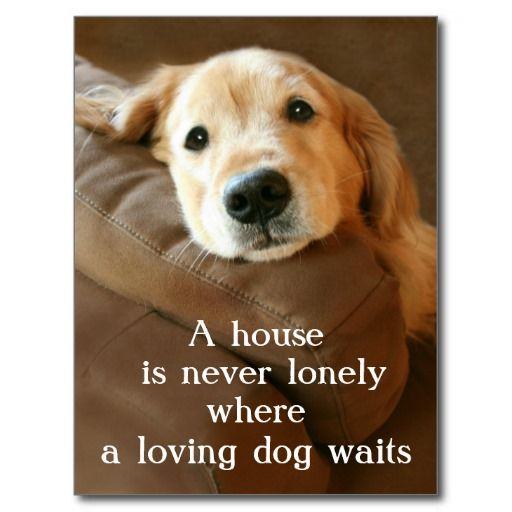 <3 My home is never lonely! <3 Golden Retriever A House Is Never Lonely Post Cards by #AugieDoggyStore