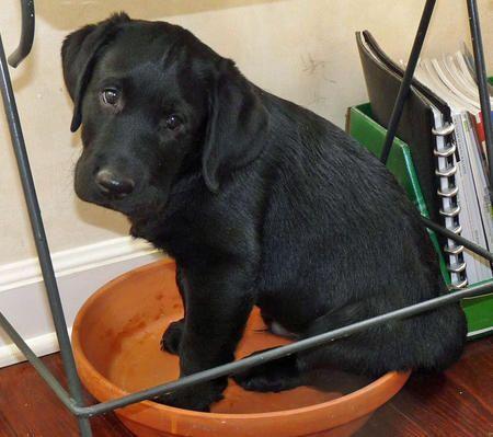 M s de 25 ideas incre bles sobre estanque de perros en for Estanque para perros