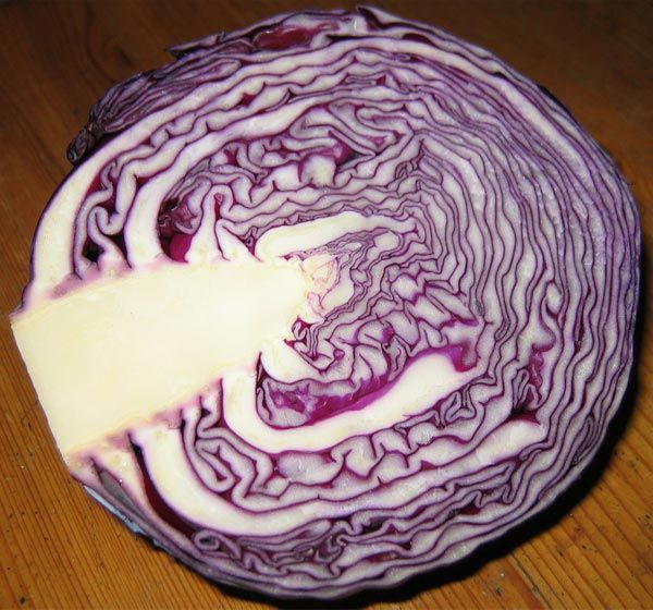 15 Amazing Benefits Of Red Cabbages You Should Be Aware Of www.PersonalTrainerBradenton.com