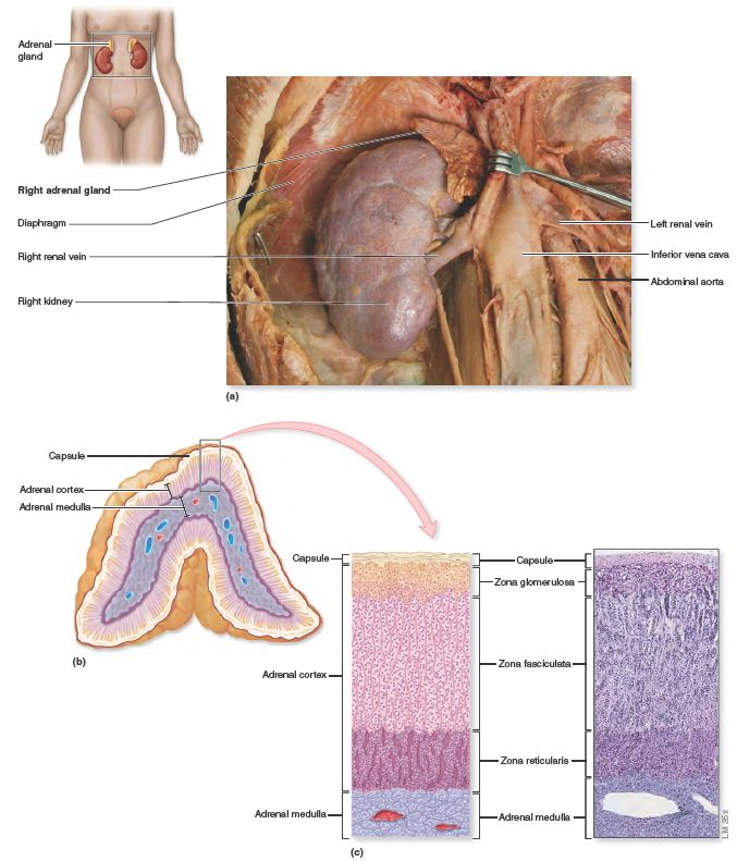 Pin On Endocrinemetabolic