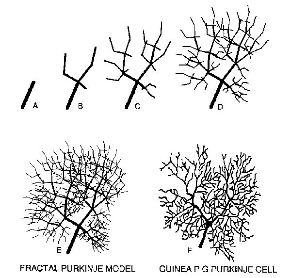 best 25  neuron model ideas on pinterest