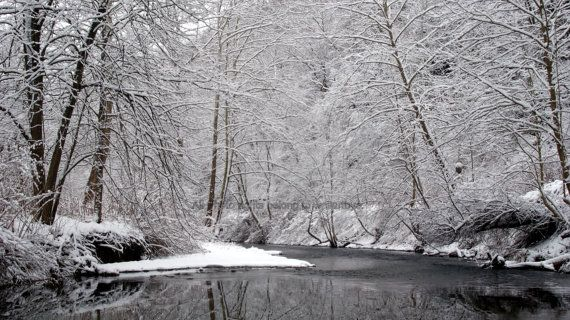 Snow Covered trees along the Turtle Creek in by WallArtbyE on Etsy