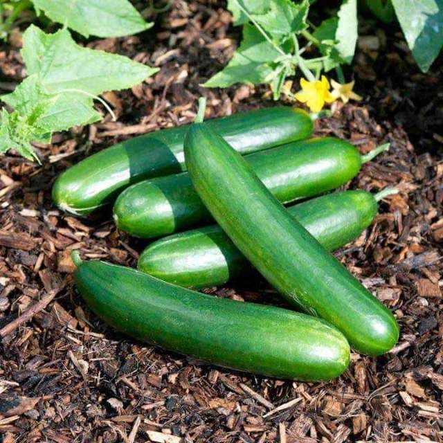 HEALTH :Top Health Benefits of Cucumbers