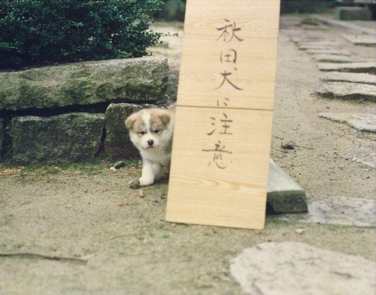 """あきほ@秋田犬保存会さんのツイート: """"注意してください(`・ω・´) https://t.co/olqy1SxBIk"""""""
