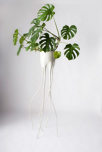 The Monstera Magnifica and Monstera Fugiens Pots