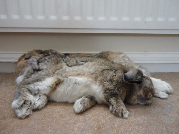 Lilly and Harvey from Lucy Gemma Ford. #EveryBunnyNeedsSomeBunnyToLove