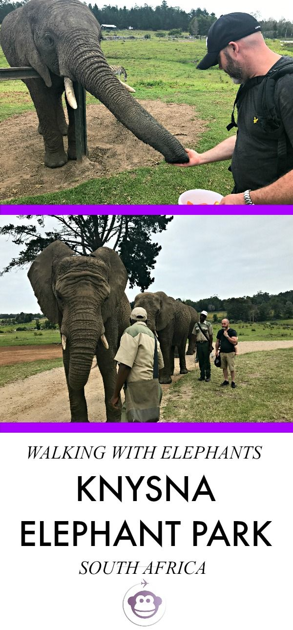 Walking With Elephants | South Africa | Knysna Elephant Park | Things To Do in Knysna | Things To Do With Kids in Knysna | Trip To South Africa | Wildlife | Conservation | Travel | Trip | Family Travel | Travel With Kids