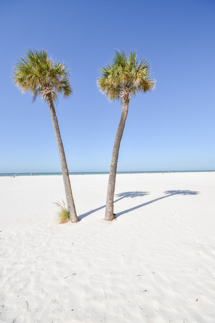 Just imagine: You and the palm trees in Clearwater, Florida