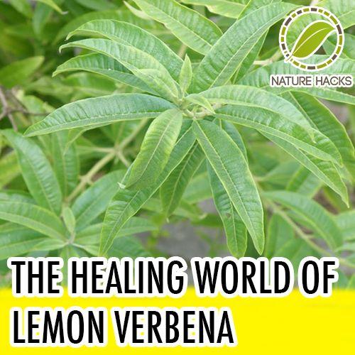 Will put this in the lemon category: Healing Properties of Lemon Verbena
