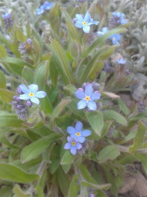 My favourite flower <3
