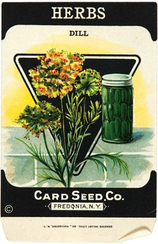 This would look great in a country kitchen!  Herbs. (Dill)  130 x 85mm  Original vintage seed packets, chromolithographs, printed by Genesee Valley Litho., N.Y, c.1920. #kitchen #cuisine #advertisement