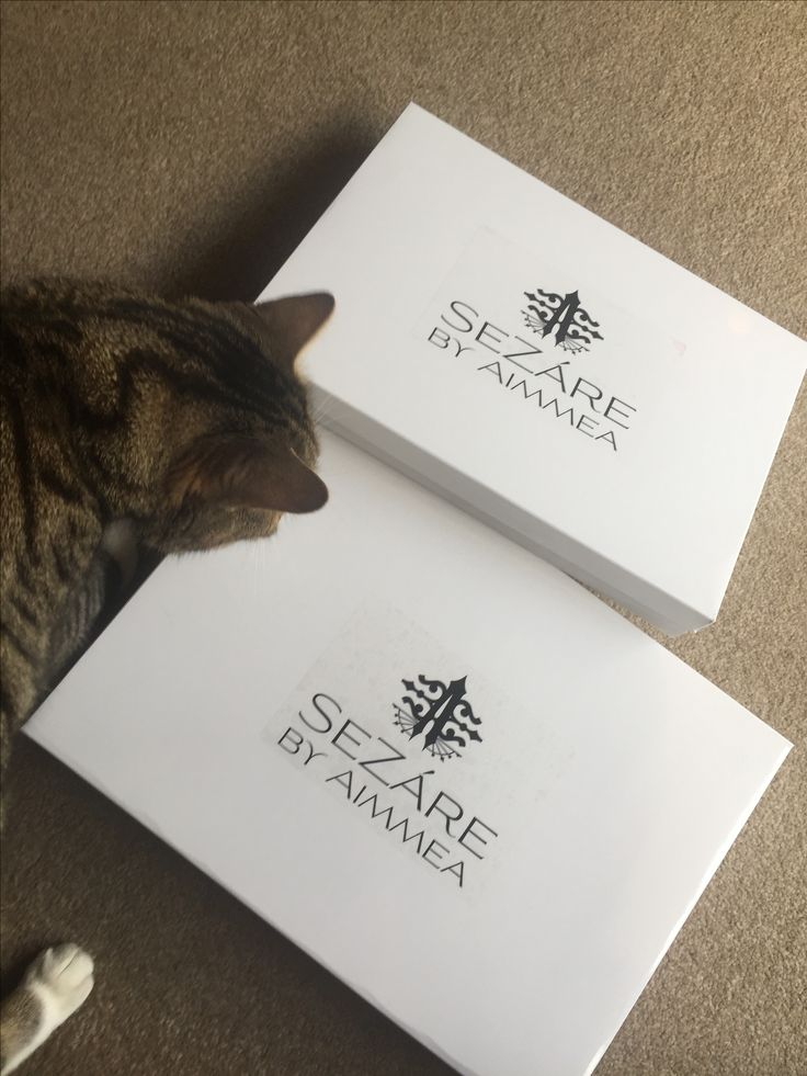 Puss testing the packaging again