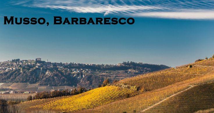 musso-azienda-winery-profile-social-vignerons-hills-piedmont-italy